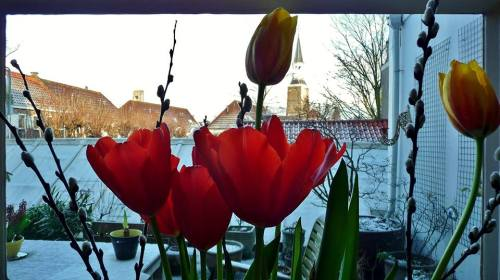 TulpenGouda_HeleenJanssens