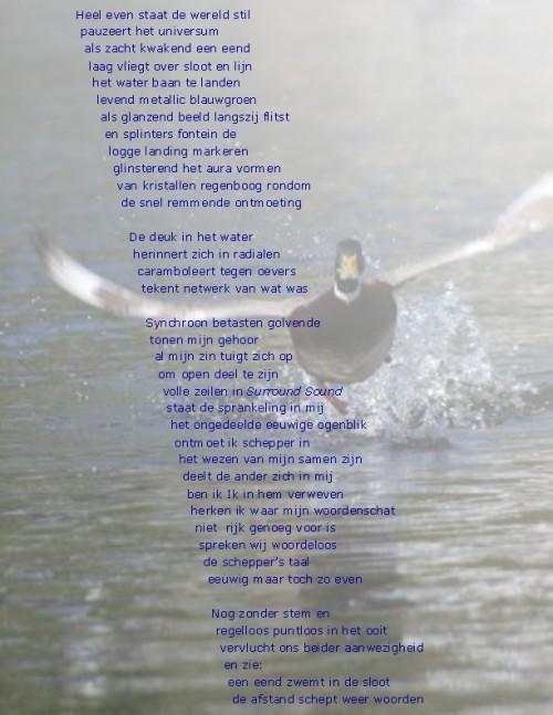 eend op de rand van water plus gedicht 2