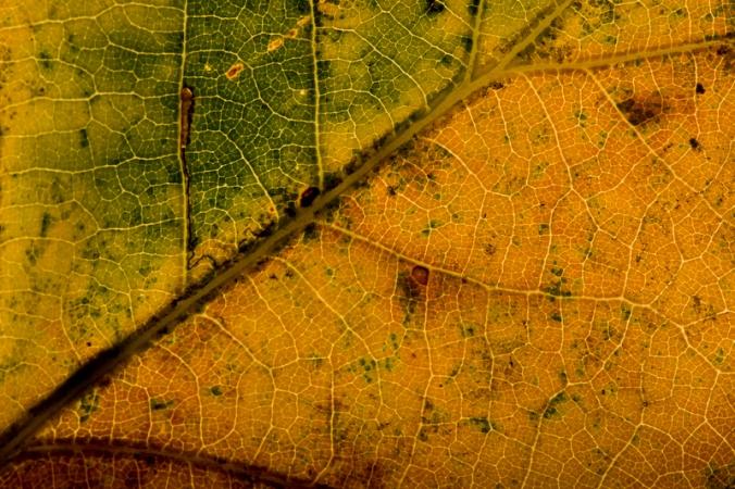 herfstblad-ArwinBos