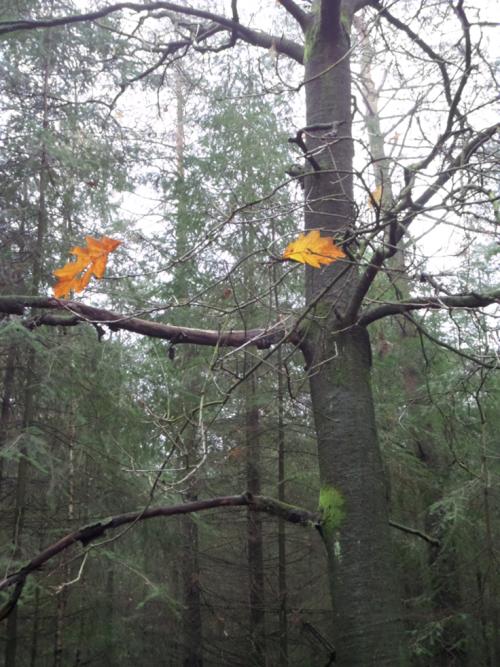 Bomen_metTweeblaadjes