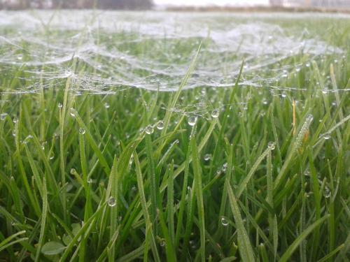 gras-spinnenweb-dauw-rouveen