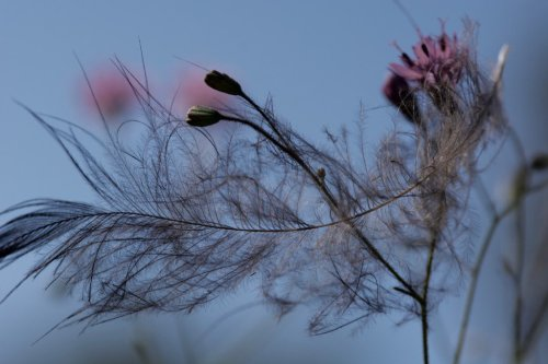 gilenlinn_featherlight